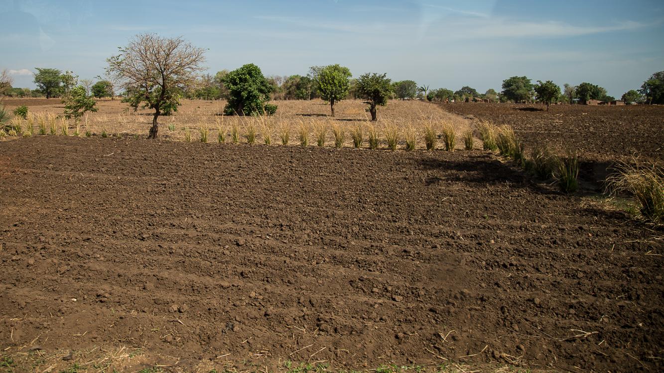 Fields for corn.